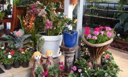 floricultura-meyer